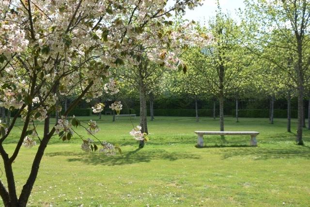 Floraison des cerisiers dans le bosquet de l'octogone du parc du château du Troncq
