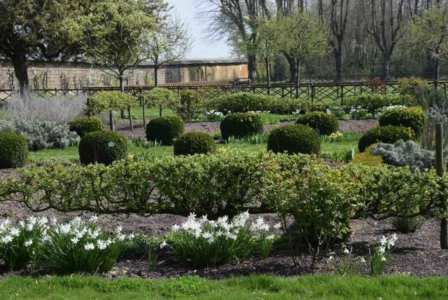 JO Narcisses Thalia et belles formes cordons 2019 DSC_1469